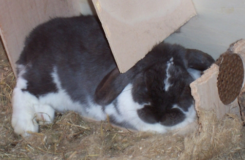 und hier schläft das Hoppelchen schon wieder!